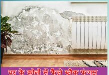 Get rid of black fungus spread in the corners of the house